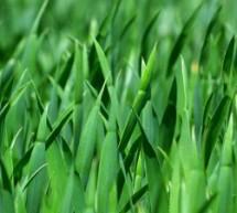 כיצד דשא סינטטי הוא הפתרון המשתלם ביותר לטווח הארוך?