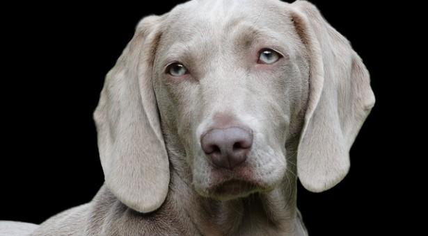5 טיפים שיעזרו לך לעשות אילוף כלבים בבית