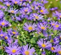 מעצב גינות לבחירת הפרחים המתאימים לאזורכם