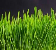 איך בוחרים דשא סינטטי